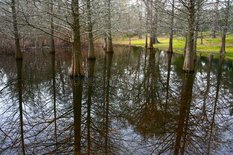 Palude del Cypress fotografie stock