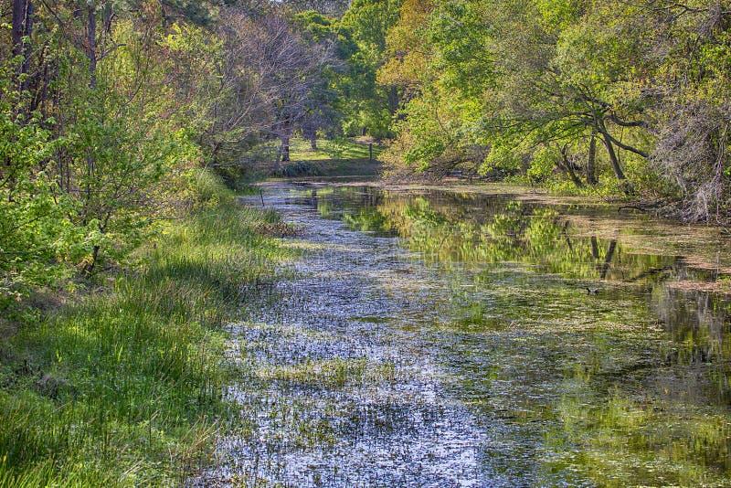 Palude dell'acero al parco del lago Sawgrass fotografia stock