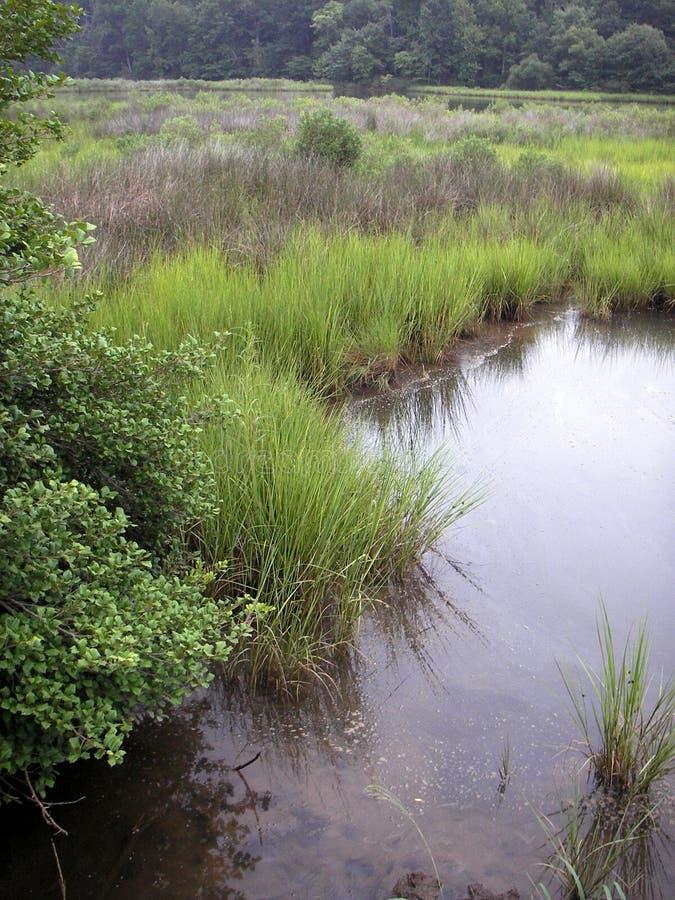 Palude della baia di Chesapeake immagini stock