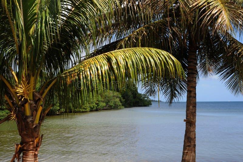 Palude della mangrovia in Sainte Rosa in Guadalupa fotografie stock