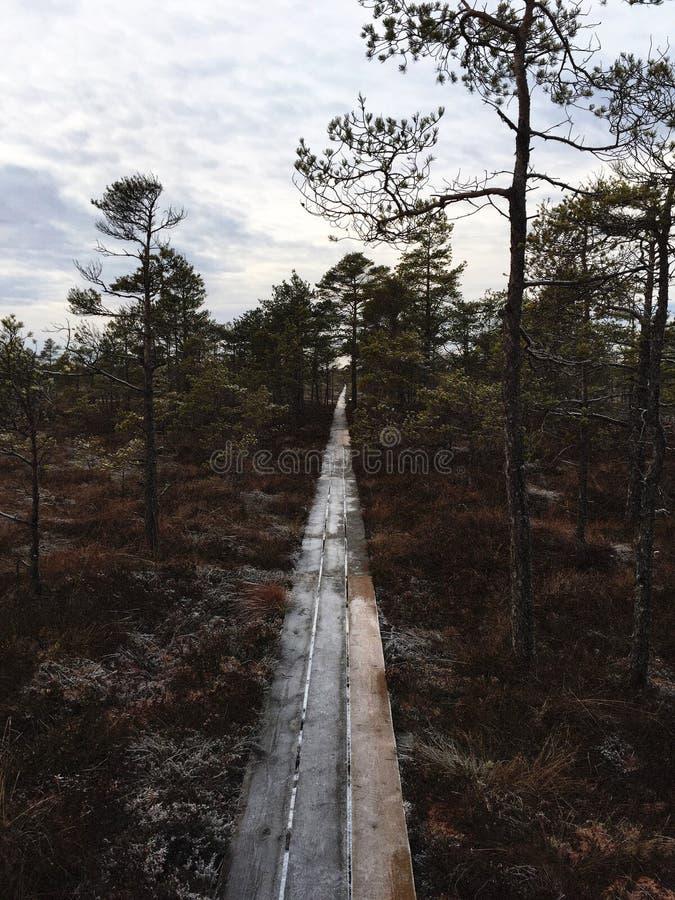 Palude di Latvain fotografia stock libera da diritti