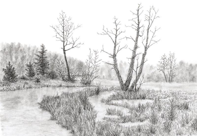 Palude erbosa con la corrente e gli alberi fotografie stock libere da diritti