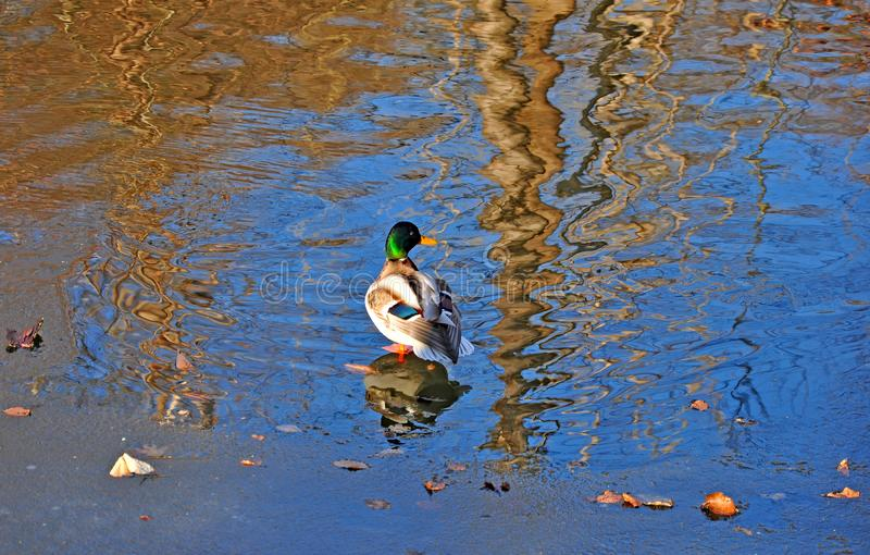 Paludi, canali e laghi immagine stock