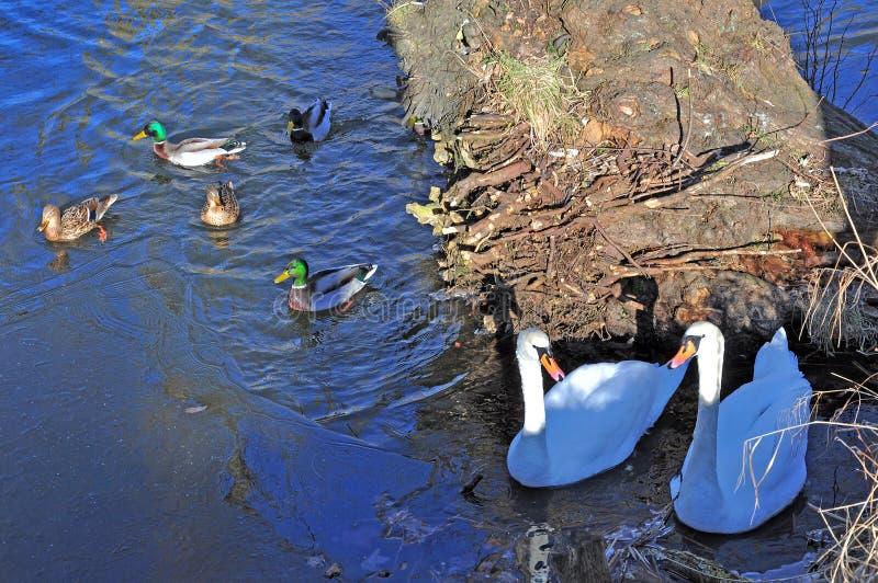 Paludi, canali e laghi immagine stock libera da diritti