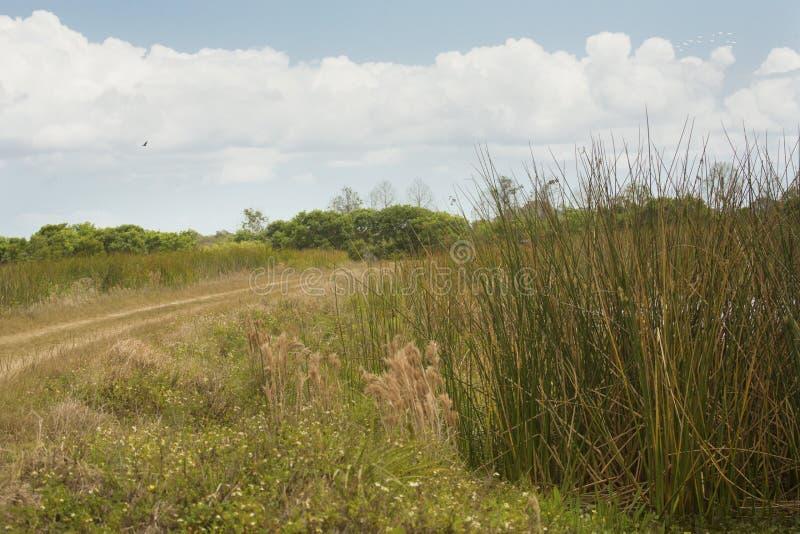 Paludi e macchia ad Orlando Wetlands Park in Florida immagini stock libere da diritti
