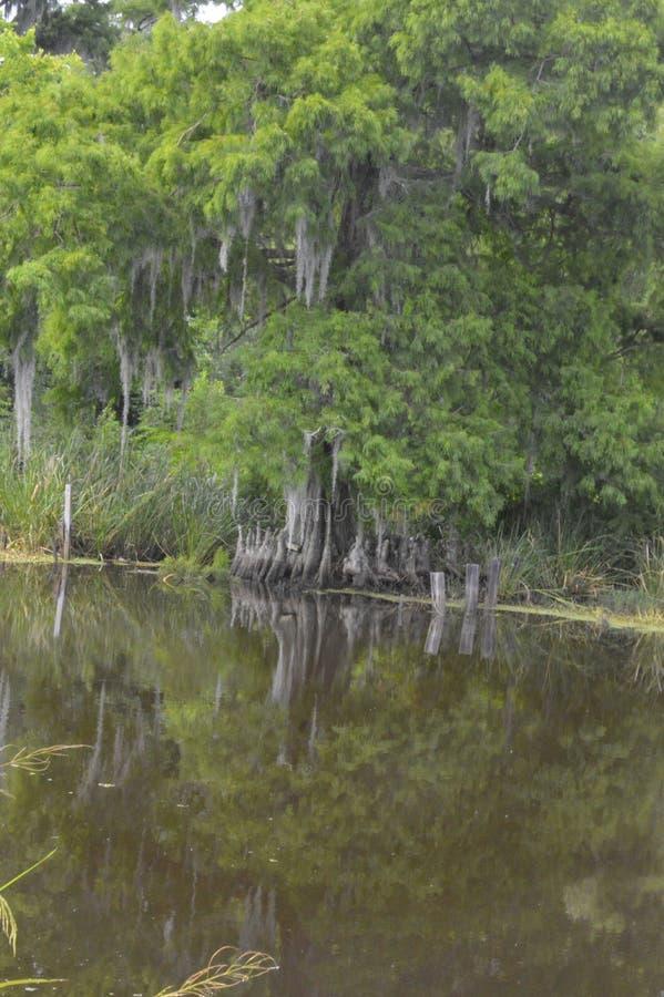 Paludi e rami paludosi di fiume della Luisiana fotografia stock
