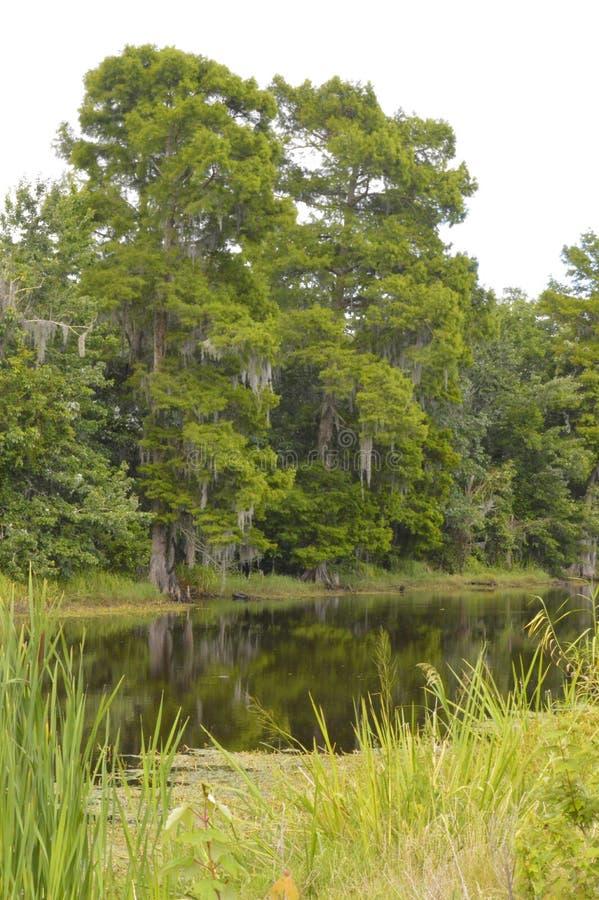 Paludi e rami paludosi di fiume della Luisiana immagini stock libere da diritti