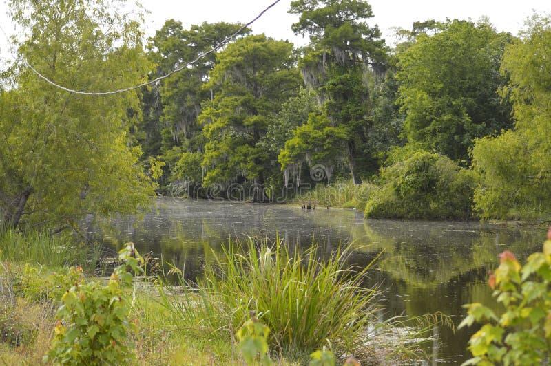 Paludi e rami paludosi di fiume della Luisiana immagine stock