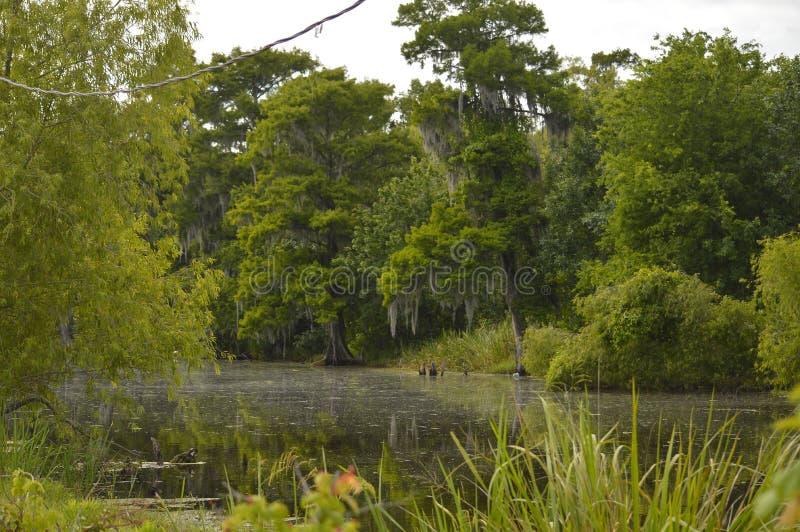 Paludi e rami paludosi di fiume della Luisiana fotografia stock libera da diritti