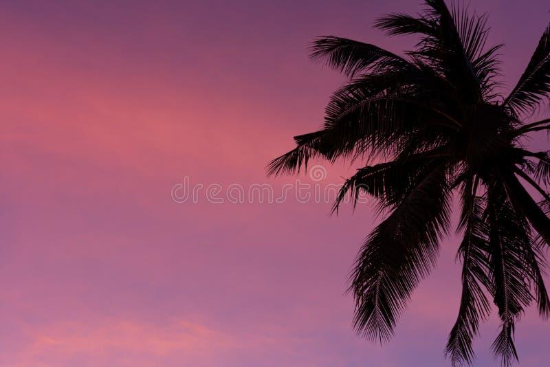 Download Pam Drzewo I Purpura Zmierzch Obraz Stock - Obraz złożonej z colours, konceptualny: 106906855