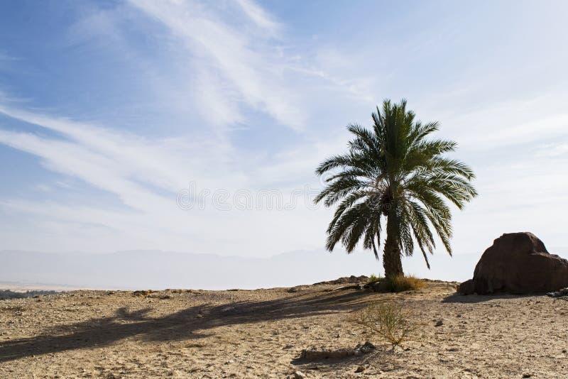 Pamiątkowy drzewko palmowe przy Yotvata w Izrael obrazy stock