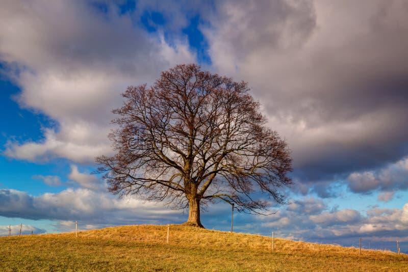 Pamiątkowy klonowy drzewo na tajemniczym miejscu w Votice, czech Republi fotografia stock