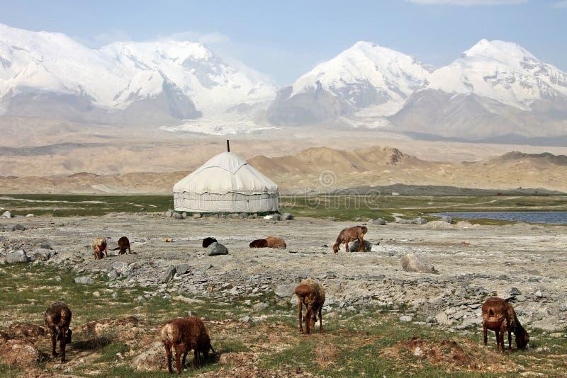 Download Pamir travel adventures stock photo. Image of nature - 33043012