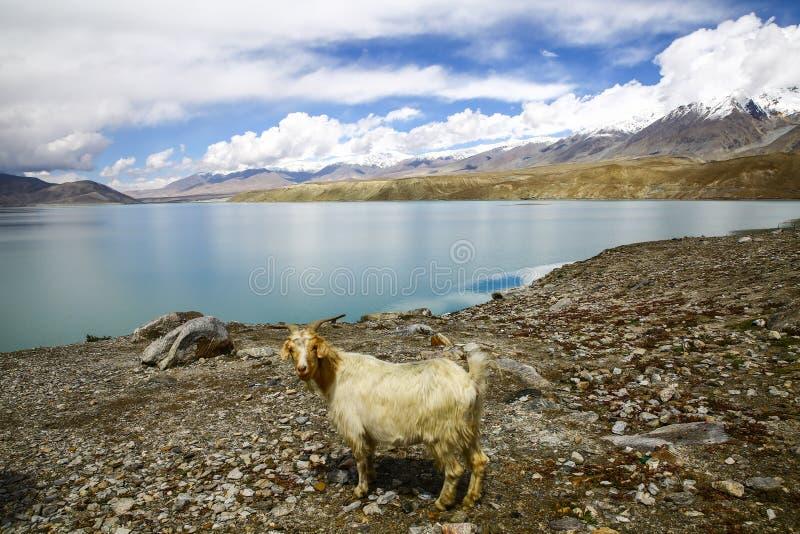 Pamirs chmury i jeziora obrazy stock