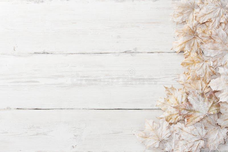 Pamle biały liść, drewniany tło obraz stock