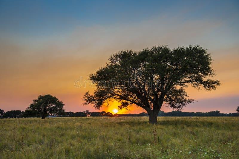 Pampas τοπίο, Αργεντινή στοκ εικόνα με δικαίωμα ελεύθερης χρήσης