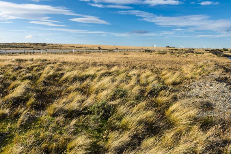 Pampas de erva no Chile imagens de stock royalty free