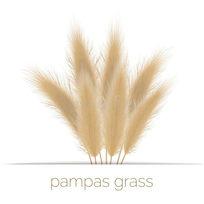Pampas espacio de césped dorado en rayas Ilustración del vector Sudamérica hierba ornamental fotos de archivo