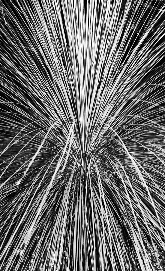 Download Pampas Grass Abstract stock image. Image of selloana, edges - 5194969