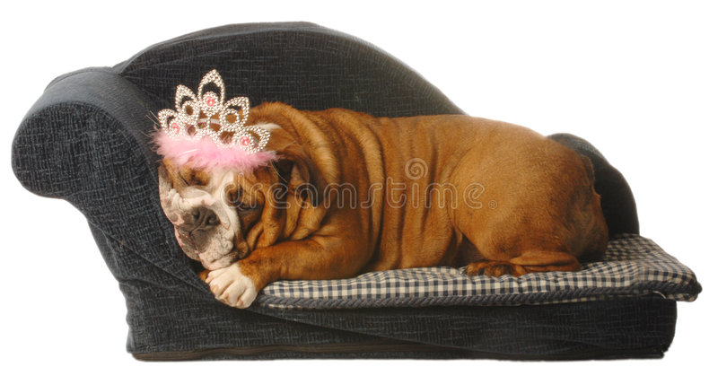 Pampered Pets Royalty Free Stock Photos