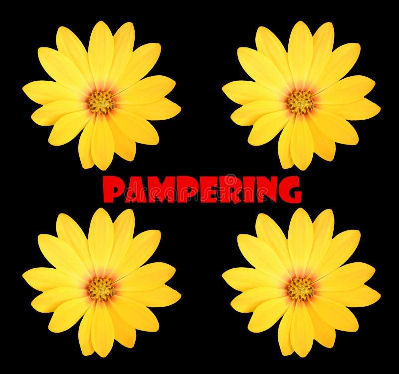 pampering stock afbeelding