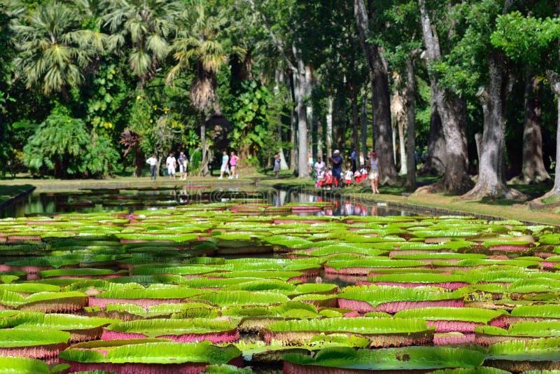 Pamplemousess植物园在毛里求斯 库存图片