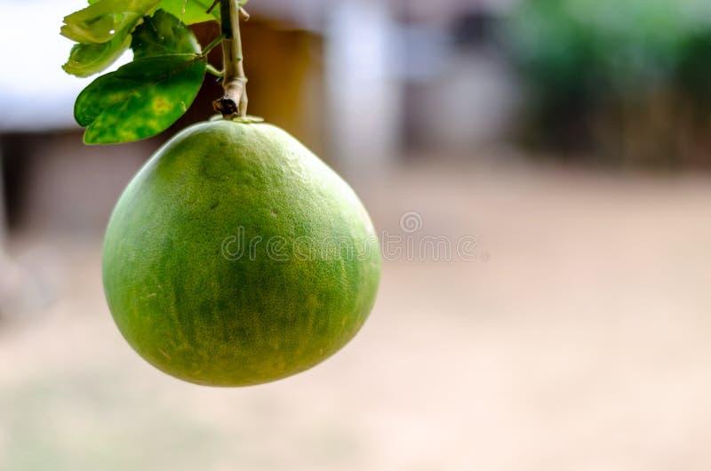 Pamplemousse Fruite photos libres de droits