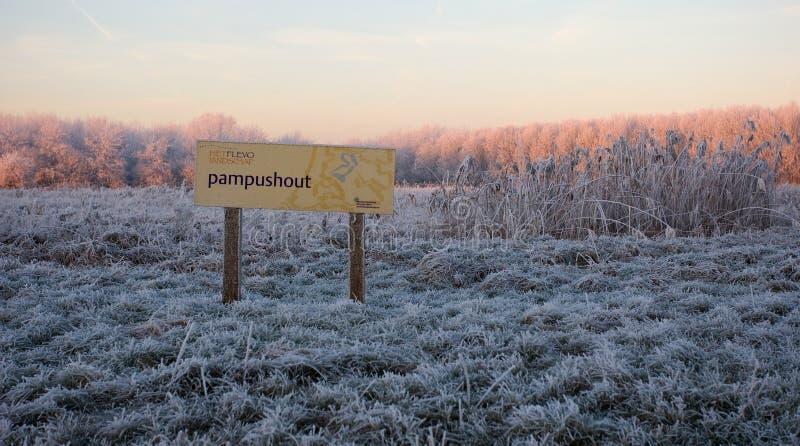 Pampushout Almere Nederländerna som täckas i hoar-frost, Pampushout royaltyfri bild