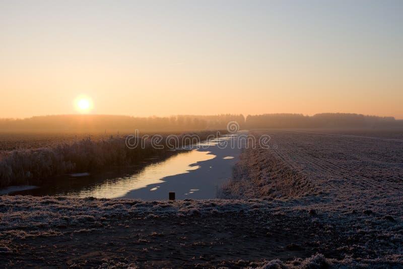 Pampushout Almere Nederländerna som täckas i hoar-frost, Pampushout royaltyfria foton