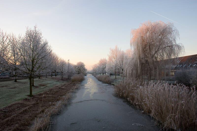 Pampushout Almere Nederländerna som täckas i hoar-frost, Pampushout arkivfoto