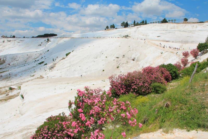Pamukkale - замок хлопка, провинция Denizli в югозападной Турции Зона известна для белого минерала карбоната выведенного путем пр стоковое изображение rf