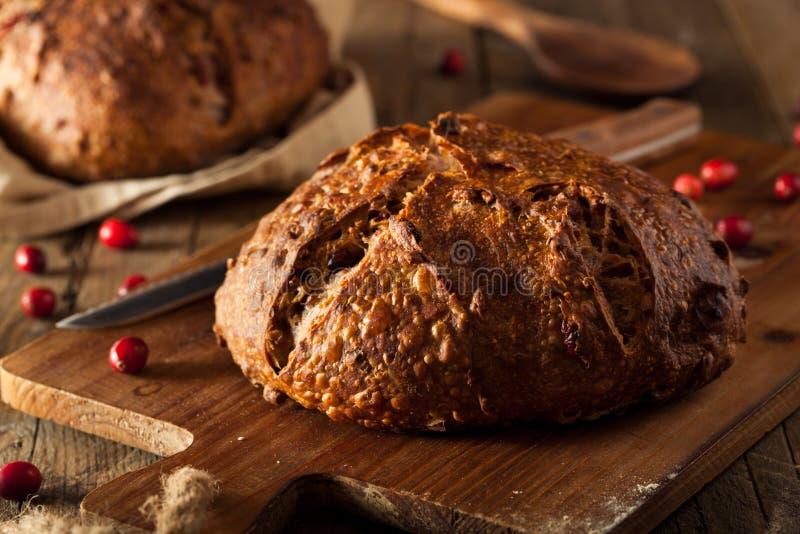 Pan hecho en casa del arándano de la nuez fotografía de archivo libre de regalías