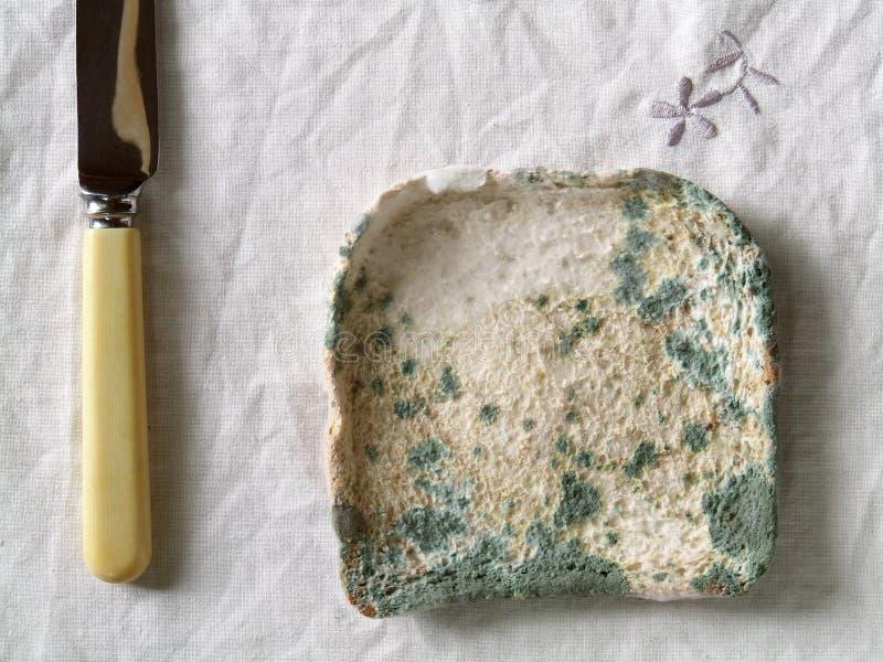 Pan mohoso foto de archivo