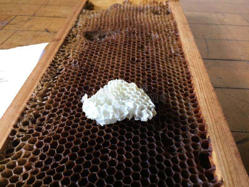 Panal y cera de abejas fotos de archivo