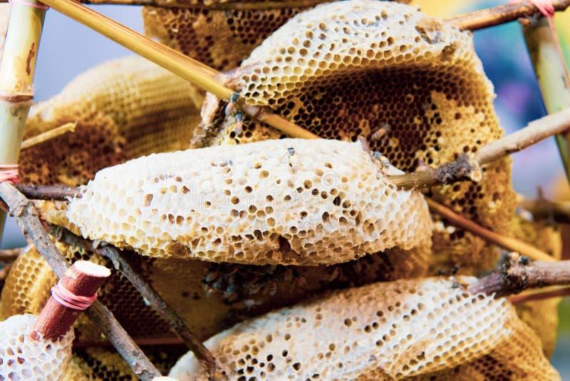 Panales y abejas salvajes, miel fresca de abejas salvajes fotografía de archivo libre de regalías