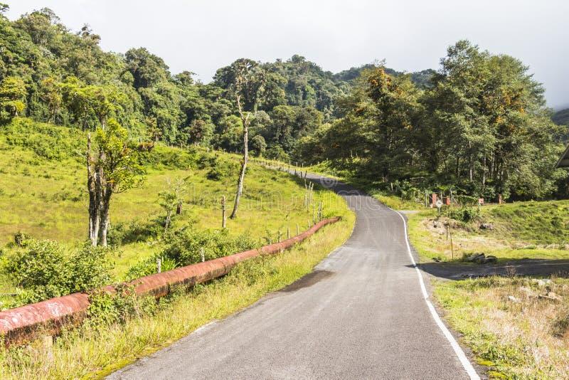 Panama Boquete landskap, Quetzalslinga royaltyfri foto