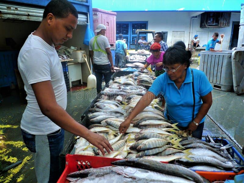 Panama-Stadt Fischmarkt lizenzfreies stockbild