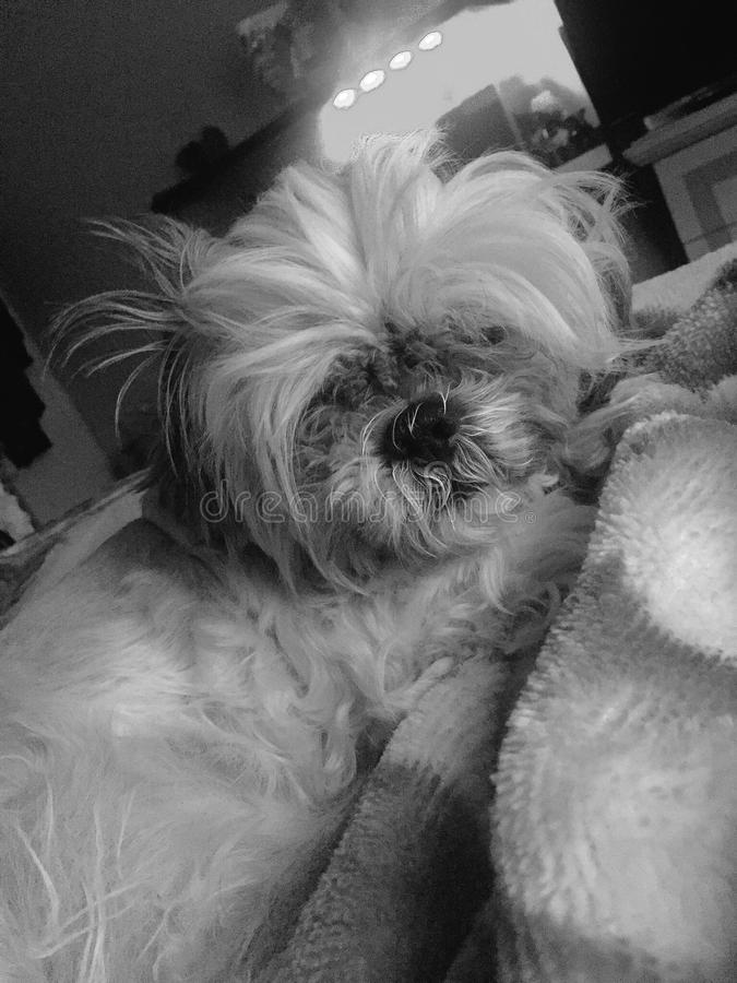 panchito do bom dia fotografia de stock royalty free