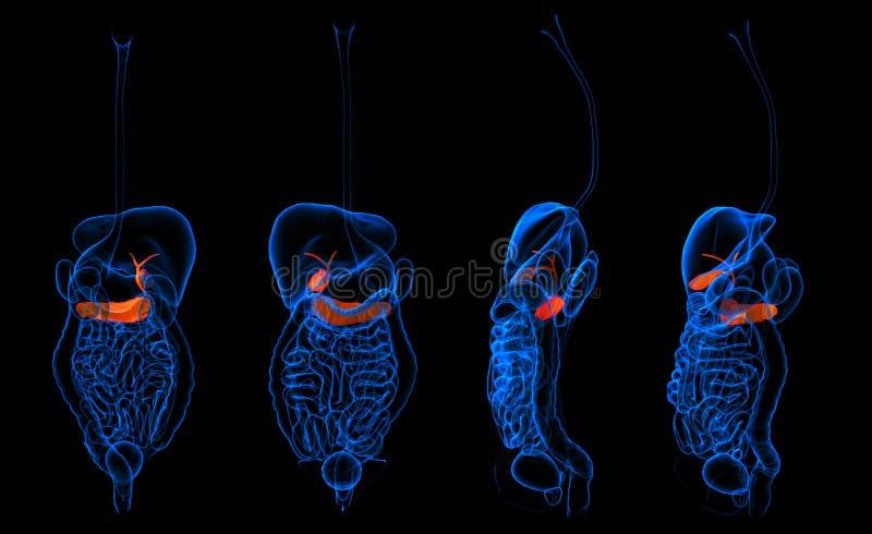 pancreas immagini stock