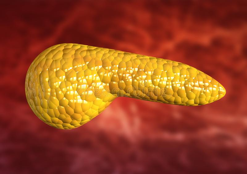 Pancreas, organo del corpo umano isolato su fondo scientifico royalty illustrazione gratis