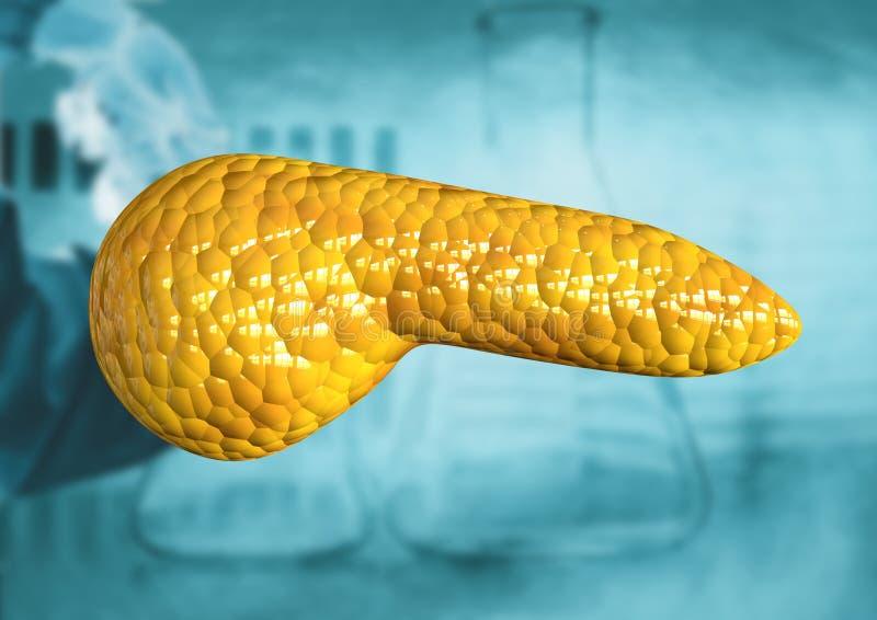 Pancreas, organo del corpo umano isolato su fondo scientifico illustrazione di stock