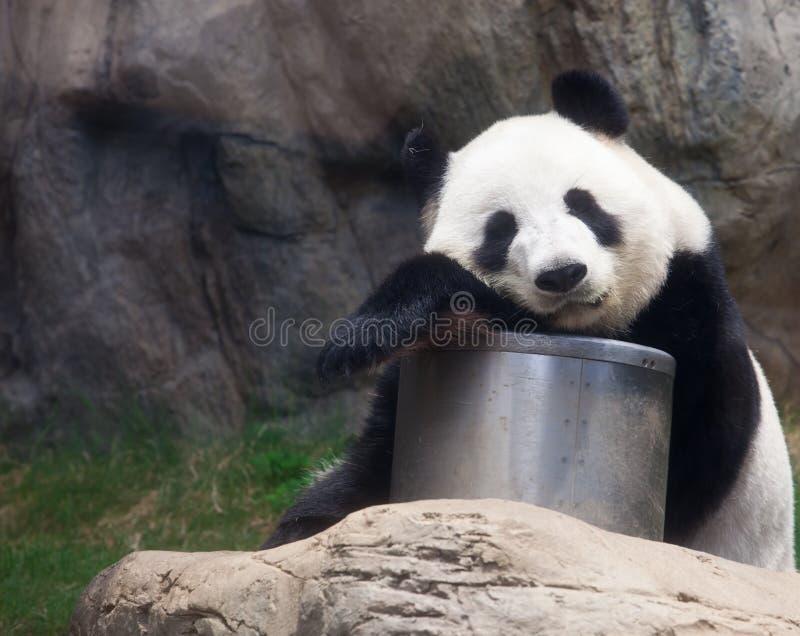 Download Panda stock image. Image of habitat, orient, china, chinese - 20934213