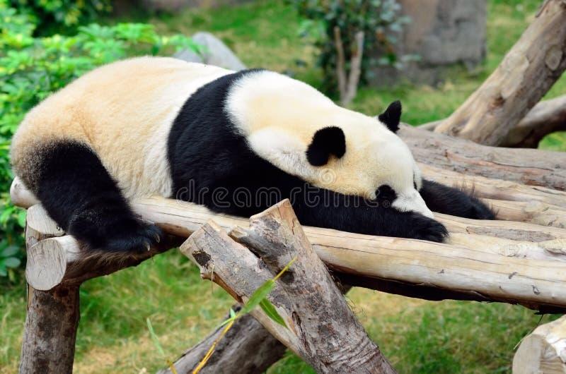 Download Panda Stock Images - Image: 22930464