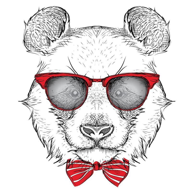 Panda del ritratto di immagine nel foulard e con i vetri Illustrazione di vettore di tiraggio della mano royalty illustrazione gratis