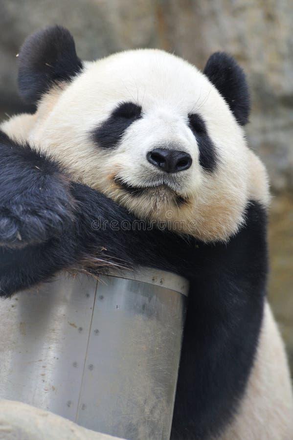 Panda encantadora imagem de stock