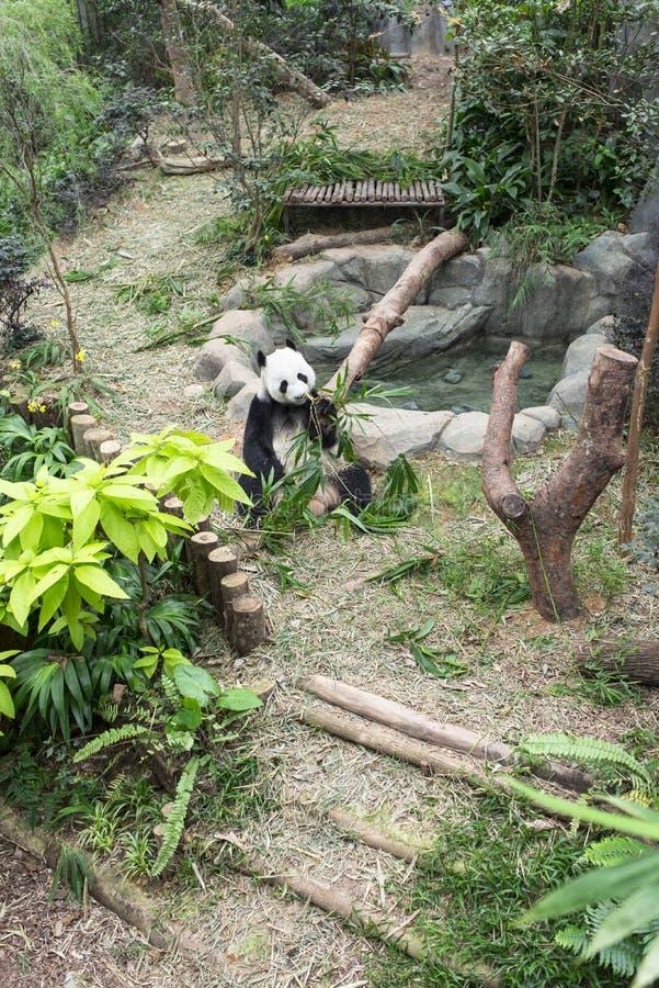 Panda Exhibit Arkivbild
