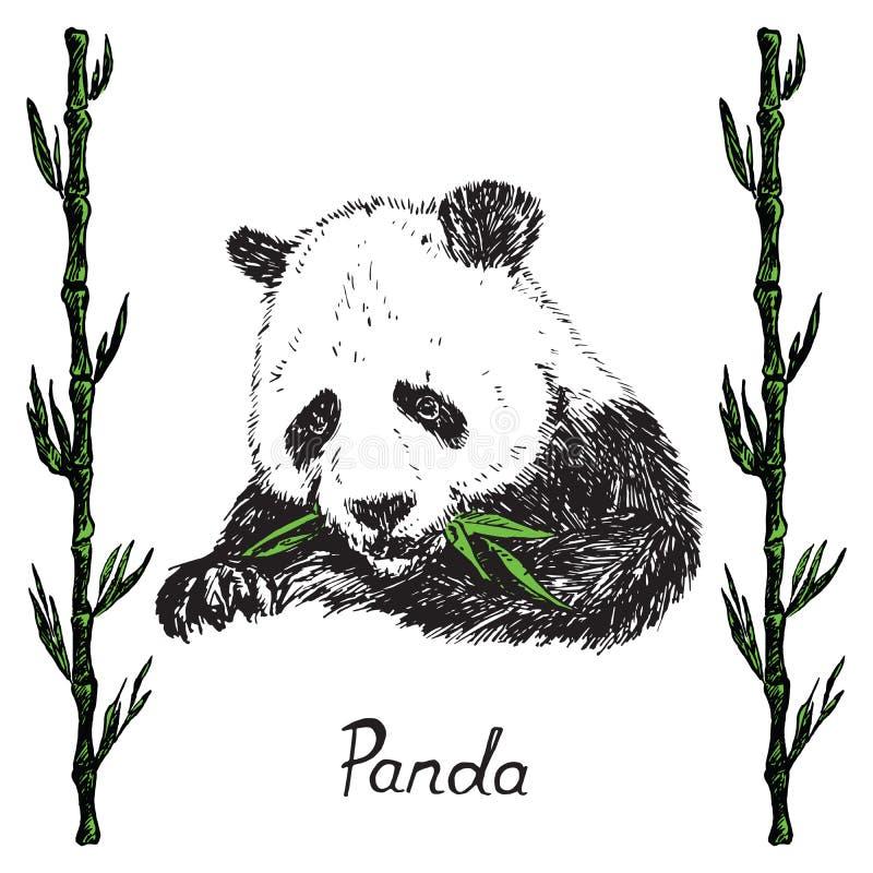 Panda gigante que come as folhas de bambu verdes, quadro de bambu dos galhos, esboço tirado mão da garatuja com inscrição ilustração do vetor