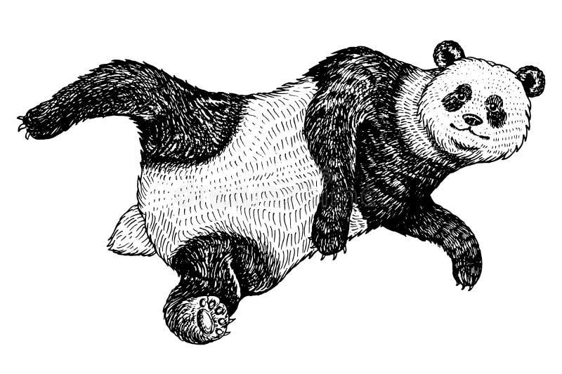 Panda gigante subindo Um animal bonito selvagem cai para baixo urso asiático preto e branco em China Estilo do vintage mão gravad ilustração royalty free