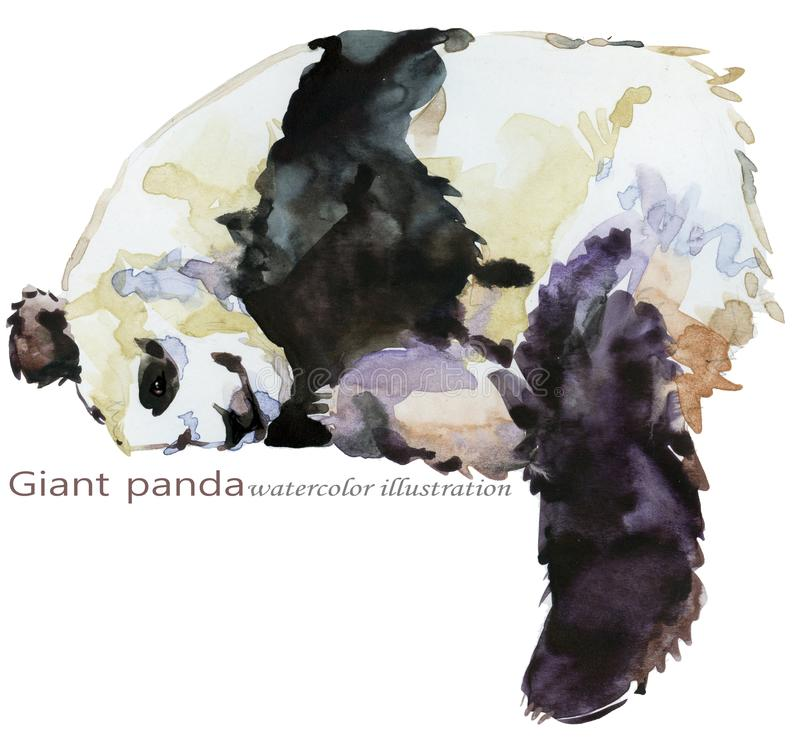 Panda hand draw watercolor illustration vector illustration