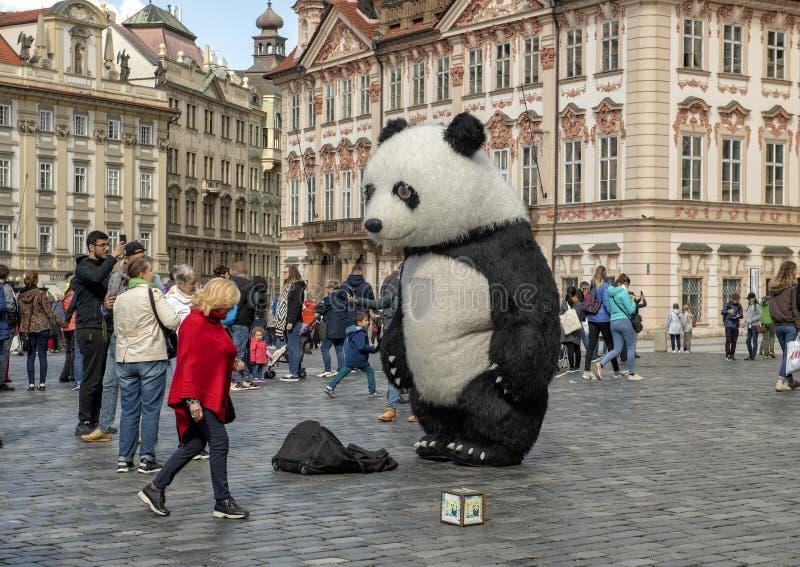 Panda niedźwiedzia uliczny wykonawca, Stary rynek, Praga, kapitał republika czech zdjęcie royalty free